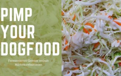 Sauerkraut – Das deutsche SUPERFOOD