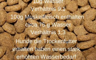Ist es tierschutzrelevant seinen Hund mit Trockenfutter zu ernähren?