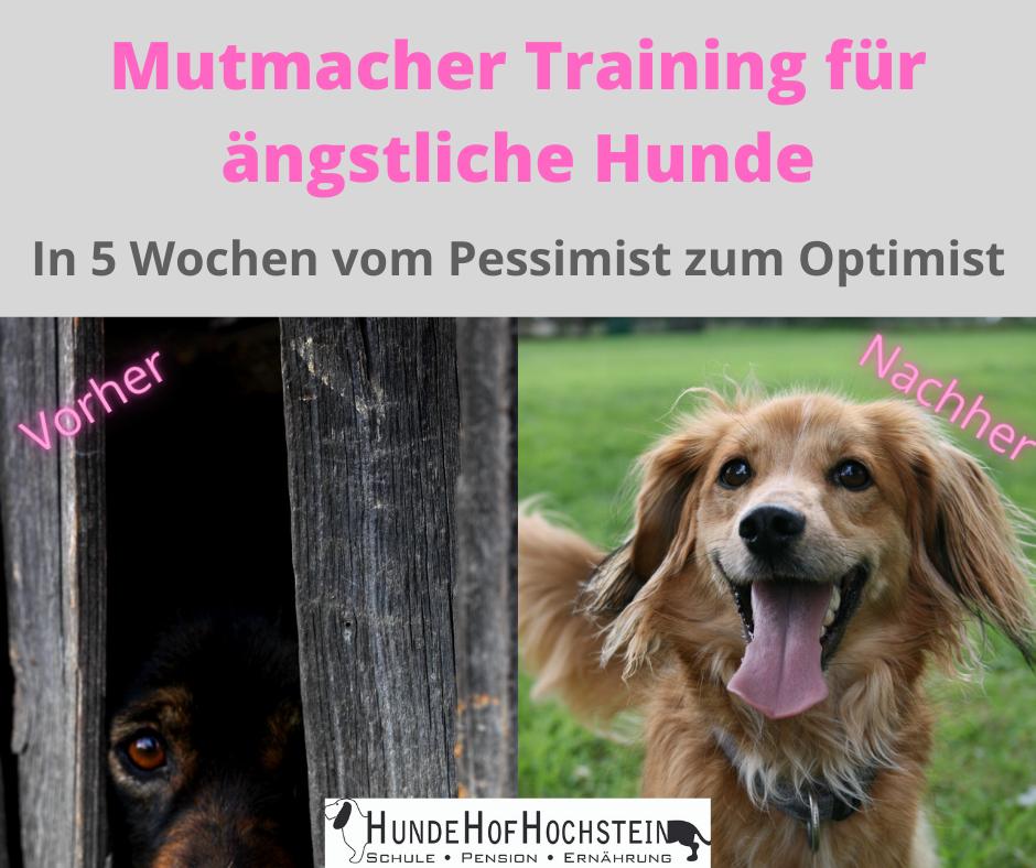 Resilienztraing für Hunde